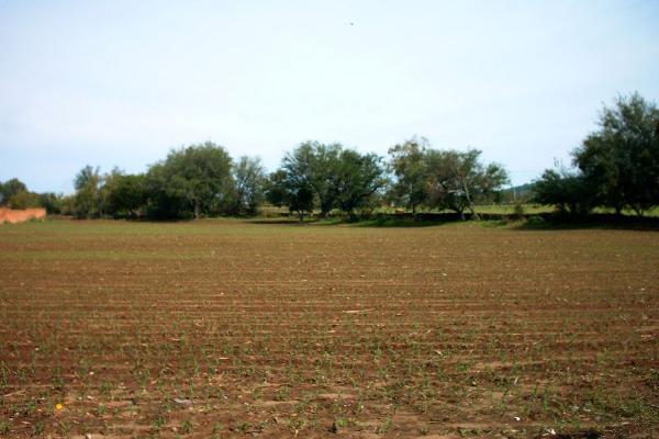 Foto de terreno comercial en venta en carretere guadalajarza-saltillo kilometro 45 , ixtlahuacan del rio, ixtlahuacán del río, jalisco, 12764316 No. 05
