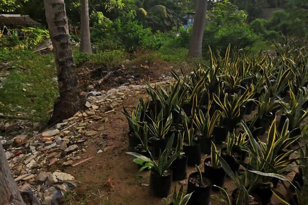 Foto de terreno industrial en venta en castelli 10, villas diamante i, acapulco de juárez, guerrero, 12055722 No. 01