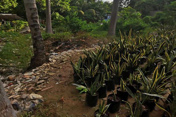 Foto de terreno industrial en venta en castelli 10, villas diamante ii, acapulco de juárez, guerrero, 12055722 No. 01
