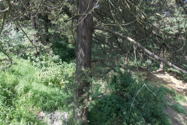 Foto de terreno habitacional en venta en cedros 35, club de golf los encinos, lerma, méxico, 5906812 No. 15
