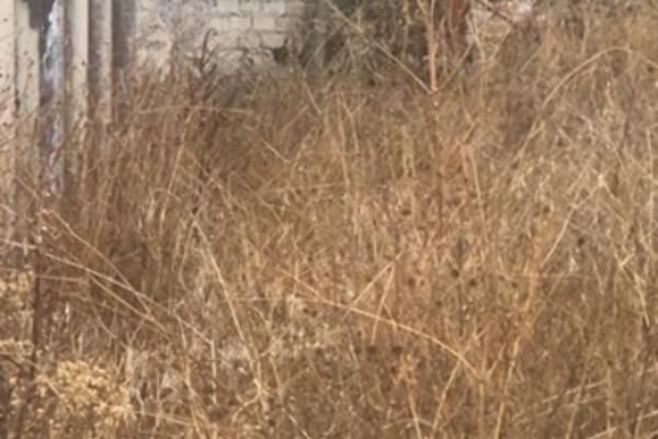 Foto de terreno habitacional en venta en cedros , santo tomas ajusco, tlalpan, distrito federal, 4644814 No. 04