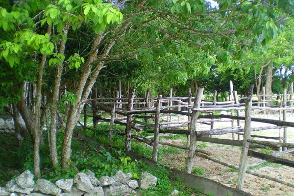 Foto de terreno comercial en venta en central vallarta , puerto morelos, benito juárez, quintana roo, 3460339 No. 02