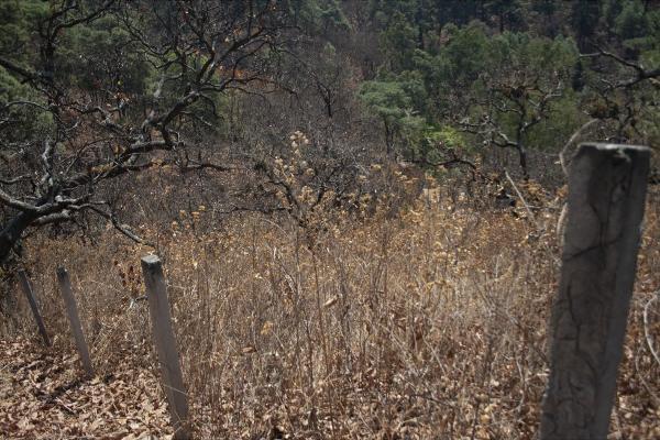 Foto de terreno habitacional en venta en  , san gaspar, valle de bravo, méxico, 5384759 No. 02