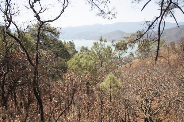 Foto de terreno habitacional en venta en  , san gaspar, valle de bravo, méxico, 5384759 No. 04