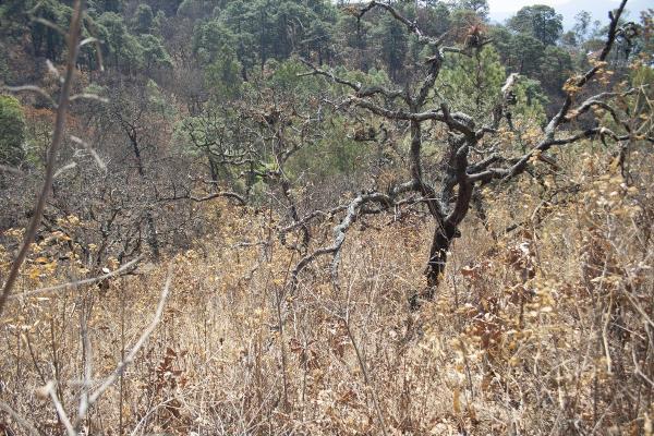 Foto de terreno habitacional en venta en  , san gaspar, valle de bravo, méxico, 5384759 No. 06
