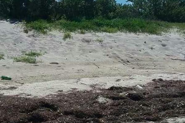 Foto de terreno habitacional en venta en  , chabihau, yobaín, yucatán, 5371360 No. 07