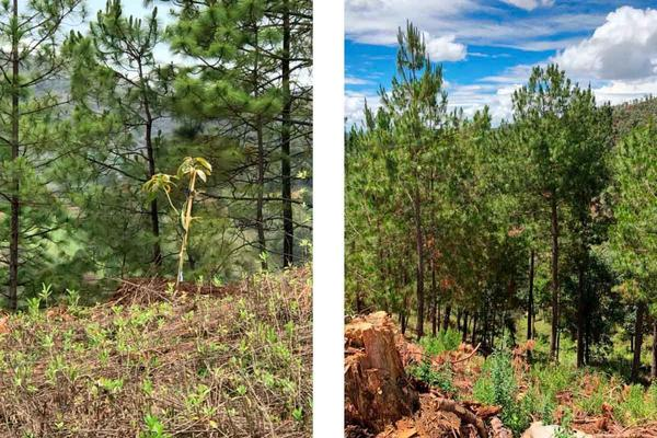 Foto de rancho en venta en  , charo, charo, michoacán de ocampo, 14340093 No. 04