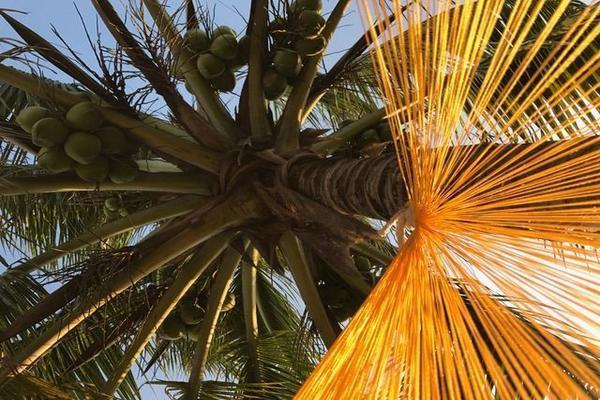 Foto de casa en venta en  , chicxulub puerto, progreso, yucatán, 15218536 No. 04
