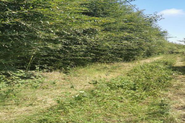 Foto de terreno habitacional en venta en  , coatepec centro, coatepec, veracruz de ignacio de la llave, 0 No. 03