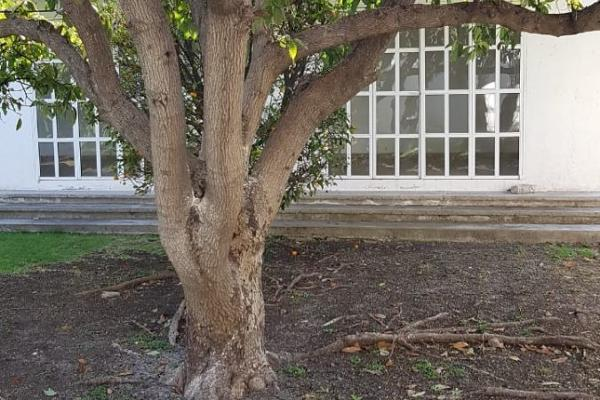 Foto de casa en venta en  , colinas del cimatario, querétaro, querétaro, 0 No. 03