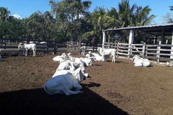 Foto de terreno habitacional en venta en  , colonia yucatán, tizimín, yucatán, 4674492 No. 27