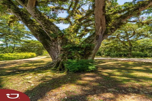 Foto de casa en venta en consolapan , la purísima, coatepec, veracruz de ignacio de la llave, 0 No. 06