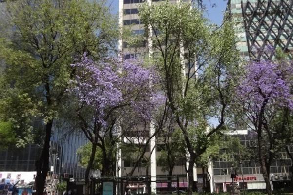 Foto de oficina en renta en  , centro (área 6), cuauhtémoc, df / cdmx, 8442489 No. 01