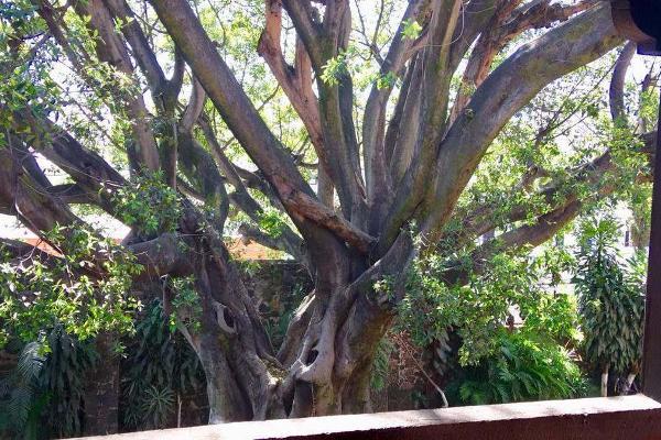 Foto de departamento en renta en  , cuernavaca centro, cuernavaca, morelos, 14025296 No. 03