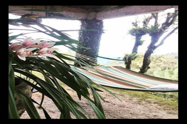 Foto de rancho en venta en  , cuetzalan del progreso, cuetzalan del progreso, puebla, 16347822 No. 36