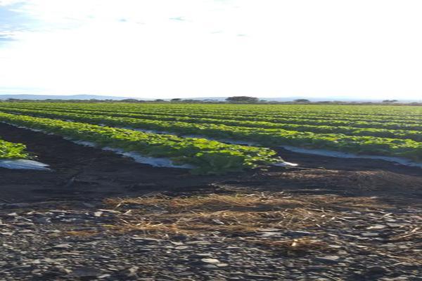 Foto de rancho en venta en cumuatillo , cumuatillo, venustiano carranza, michoacán de ocampo, 18716782 No. 03