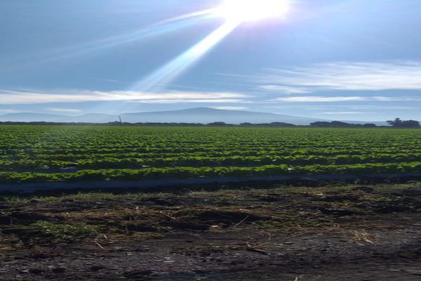 Foto de rancho en venta en cumuatillo , cumuatillo, venustiano carranza, michoacán de ocampo, 18716782 No. 05