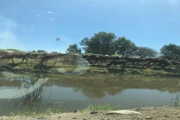 Foto de rancho en venta en cumuatillo , cumuatillo, venustiano carranza, michoacán de ocampo, 18716782 No. 45