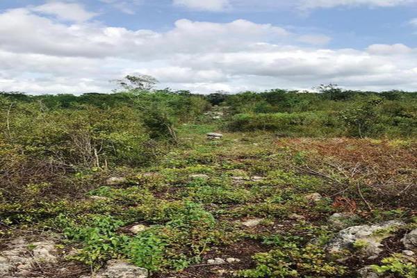 Foto de terreno habitacional en venta en  , cuzama, cuzamá, yucatán, 7861140 No. 03