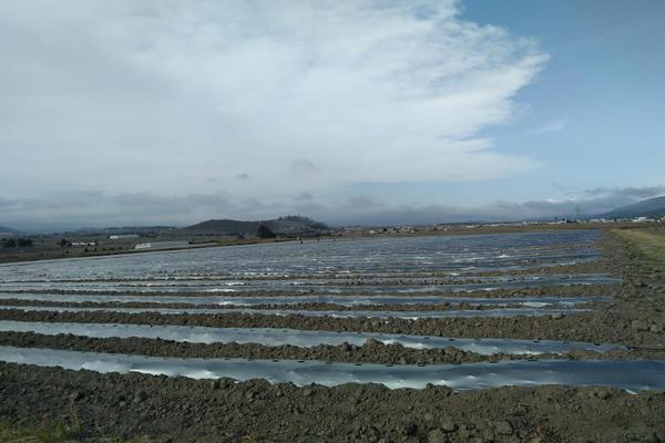 Foto de terreno habitacional en venta en domicilio conocido 0, matlahuacales de aquiles serdán, chignahuapan, puebla, 10004456 No. 21