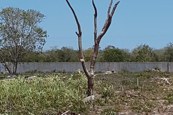 Foto de terreno habitacional en venta en  , dzemul, dzemul, yucatán, 14028548 No. 05