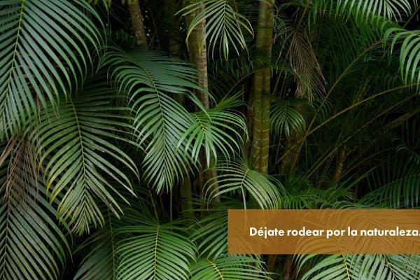Foto de casa en venta en  , dzibilchaltún, mérida, yucatán, 5683595 No. 24