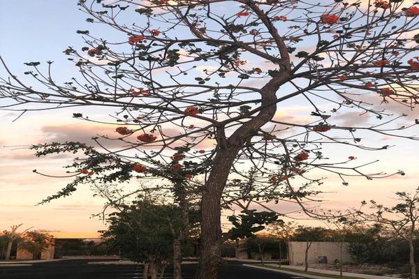 Foto de terreno habitacional en venta en  , dzibilchaltún, mérida, yucatán, 8254942 No. 19