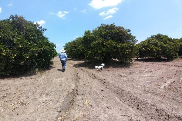 Foto de terreno comercial en venta en ejido 000, la unión 2, montemorelos, nuevo león, 8840848 No. 04