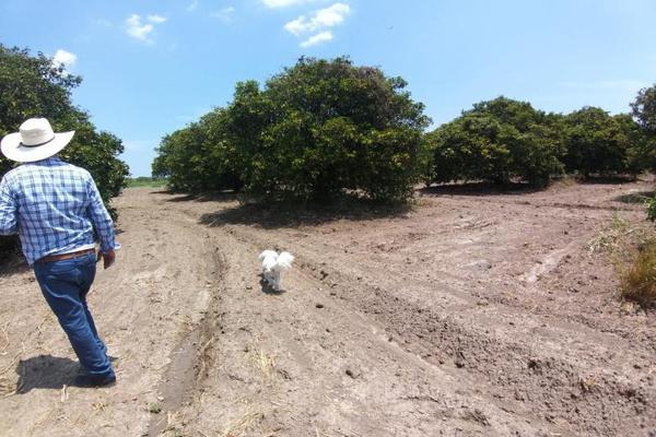 Foto de terreno comercial en venta en ejido 000, la unión 2, montemorelos, nuevo león, 8840848 No. 05