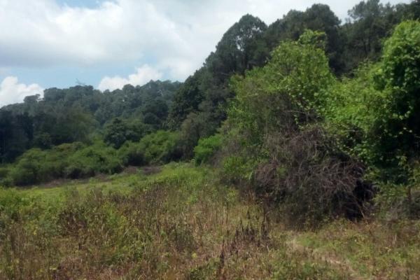 Foto de terreno habitacional en venta en el aguacate , santa magdalena tilostoc, valle de bravo, méxico, 5301918 No. 02