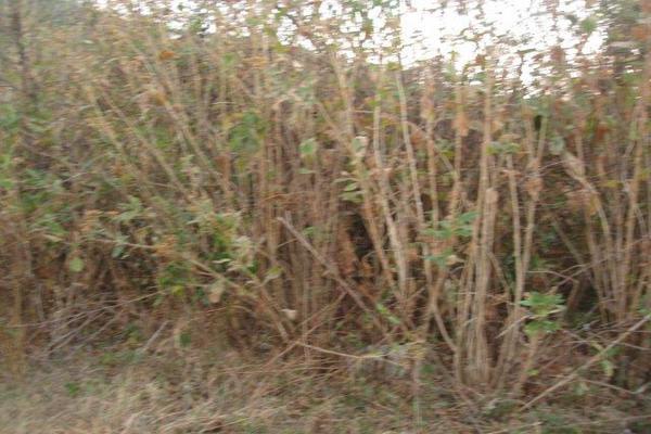 Foto de terreno habitacional en venta en el aguacate , santa teresa tilostoc, valle de bravo, méxico, 5723643 No. 05