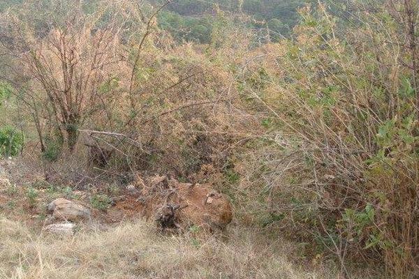 Foto de terreno habitacional en venta en el aguacate , santa teresa tilostoc, valle de bravo, méxico, 5723643 No. 06