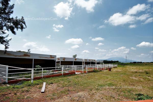 Foto de rancho en venta en  , el arenal, el arenal, jalisco, 5870818 No. 08