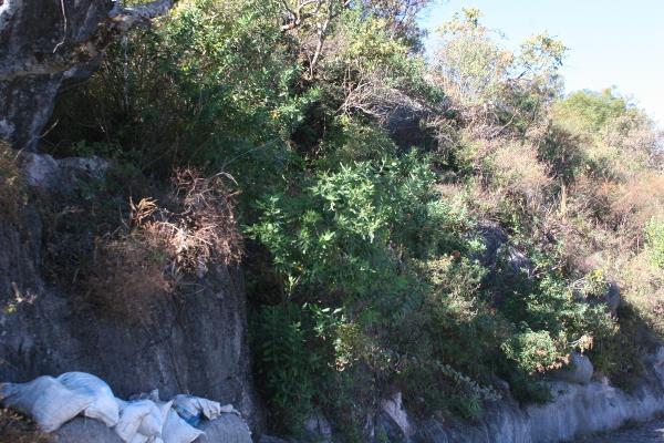 Foto de terreno habitacional en venta en el clavel , valle de bravo, valle de bravo, méxico, 4634786 No. 05