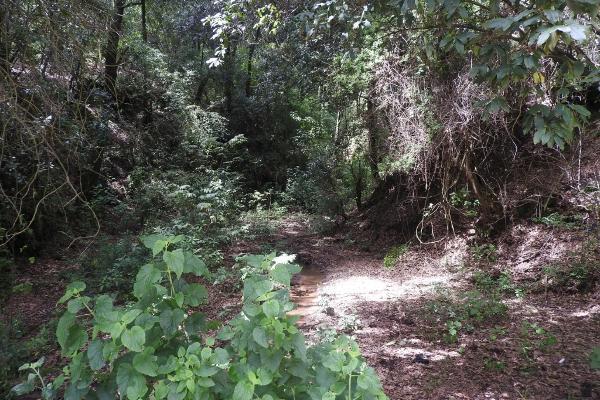 Foto de terreno habitacional en venta en el escobar s/n , tlazala, isidro fabela, méxico, 5920228 No. 02