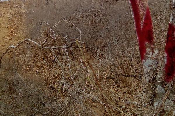 Foto de terreno habitacional en venta en el huilote , campo acosta, tomatlán, jalisco, 14031853 No. 02