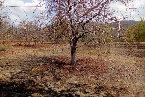 Foto de terreno habitacional en venta en el huilote , campo acosta, tomatlán, jalisco, 14031853 No. 03