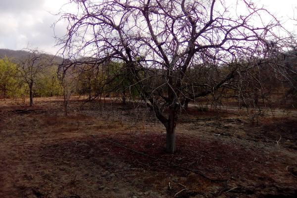 Foto de terreno habitacional en venta en el huilote , campo acosta, tomatlán, jalisco, 14031853 No. 06