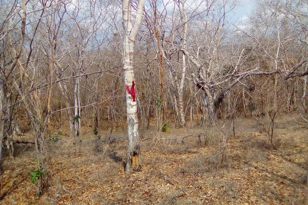 Foto de terreno habitacional en venta en el huilote , campo acosta, tomatlán, jalisco, 14031853 No. 08