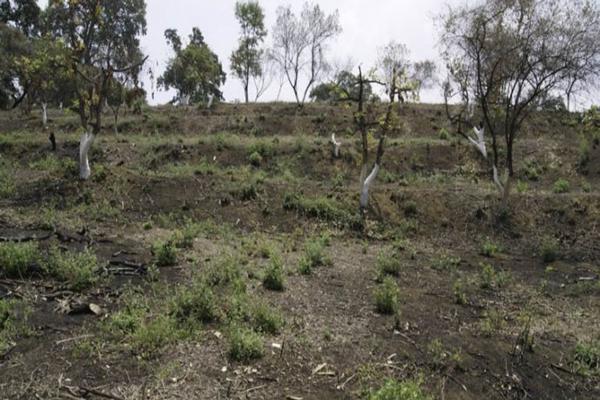 Foto de terreno habitacional en venta en el moral 1, el fuerte, totolapan, morelos, 19539200 No. 02