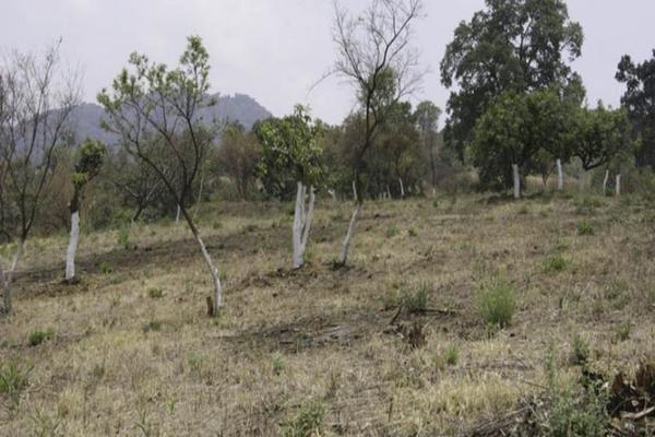 Foto de terreno habitacional en venta en el moral 1, el fuerte, totolapan, morelos, 19539200 No. 03