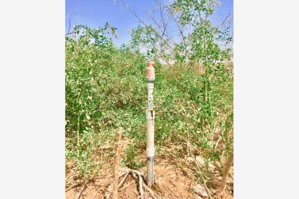 Foto de terreno comercial en venta en  , el olivo, matamoros, coahuila de zaragoza, 7194939 No. 11