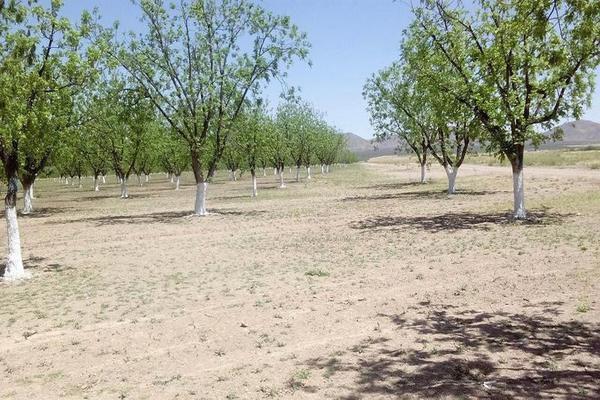 Foto de casa en venta en  , el porvenir, camargo, chihuahua, 7312839 No. 11