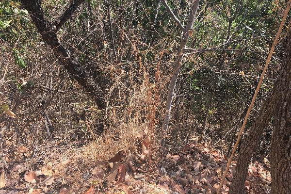 Foto de terreno habitacional en venta en el santuario . , el santuario, la piedad, michoacán de ocampo, 4667076 No. 04