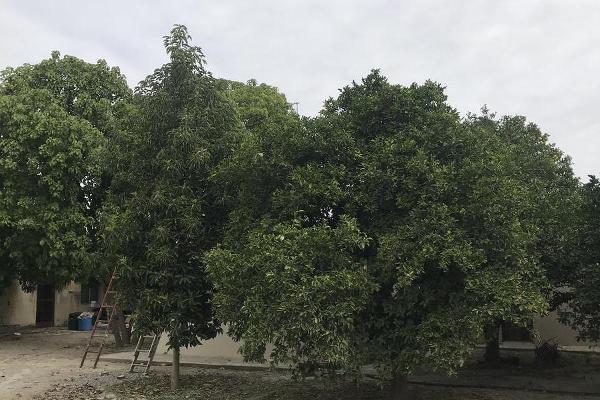Foto de casa en venta en  , el tepehuaje, cadereyta jiménez, nuevo león, 12832395 No. 08
