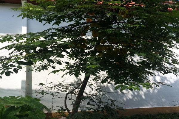 Foto de casa en venta en elpidio jhael 12, centro vacacional oaxtepec, yautepec, morelos, 15214519 No. 35