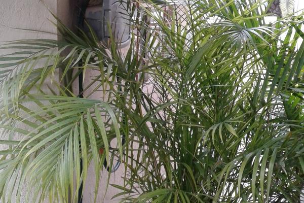 Foto de casa en venta en fresno , pinos del agüero, tijuana, baja california, 3431897 No. 09