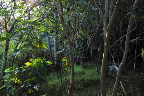 Foto de terreno habitacional en venta en granjas de guadalupe , granjas lomas de guadalupe, cuautitlán izcalli, méxico, 6163042 No. 01