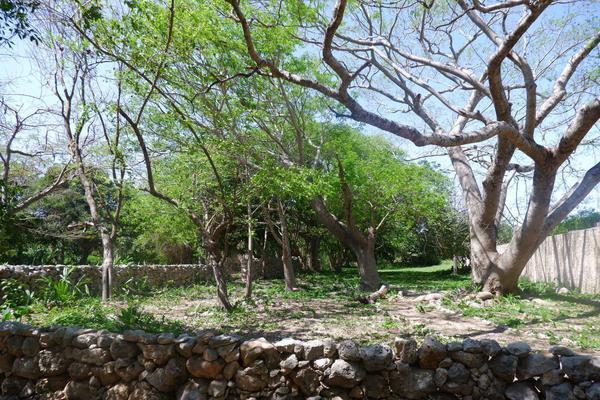 Foto de rancho en venta en  , hacienda mulsay, mérida, yucatán, 19819415 No. 17
