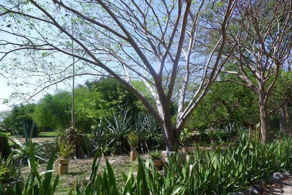 Foto de rancho en venta en  , hacienda mulsay, mérida, yucatán, 19819415 No. 18